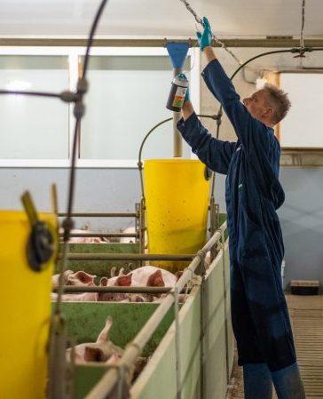 salmonellose in de varkenshouderij