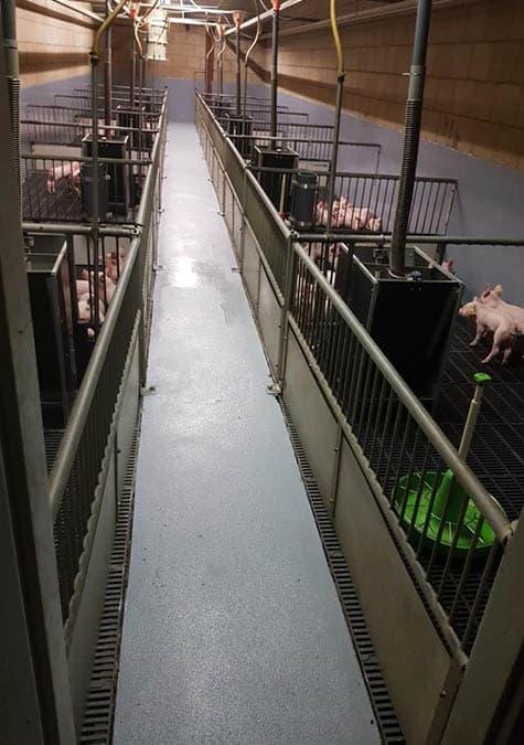 varkensafdeling