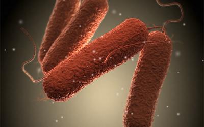 Wat is salmonellose en wat doet u er aan?
